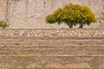 Entre las piedras del castillo sobrevive un árbol, que le da sombra a dos banquitos y al encargado de disparar el cañón.