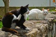 Como no pueden faltar, los gatos callejeros también forman parte de Çesme.