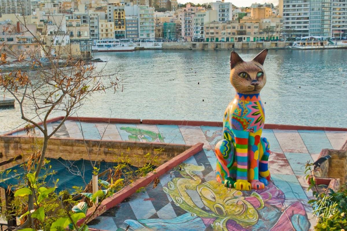 Gato de colores Malta