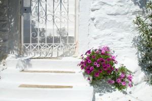 Flores Icaria
