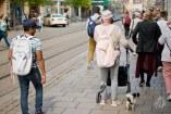 Perritos con dueños en Erfurt.
